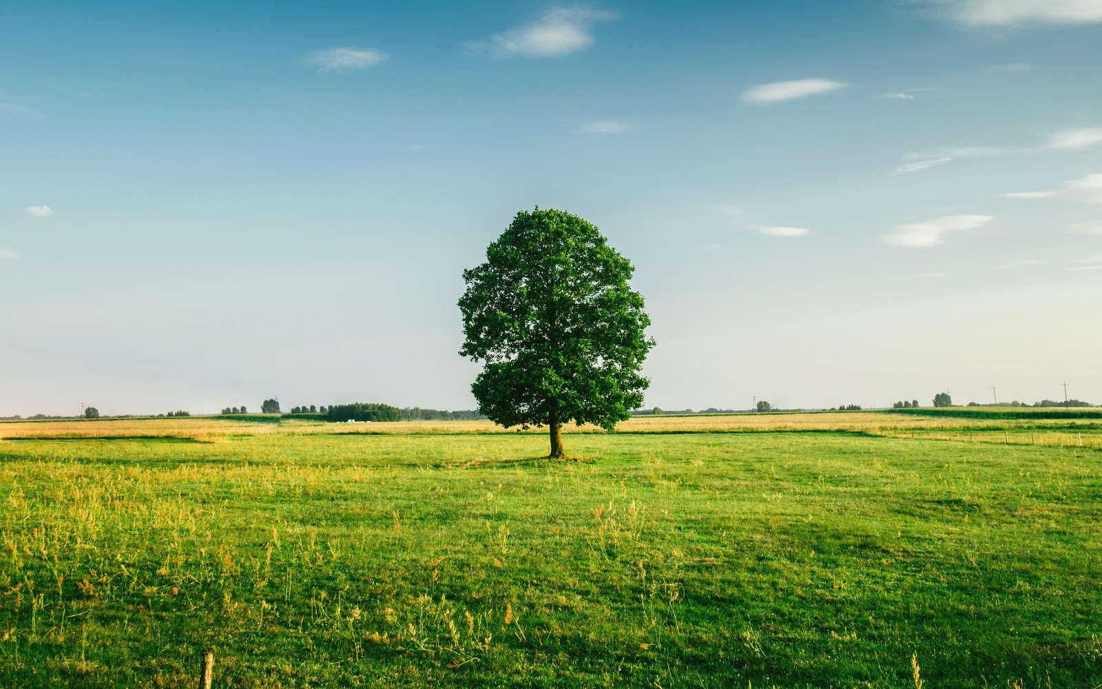 Hochbeet-Farm-Hintergrundbild-Startseite