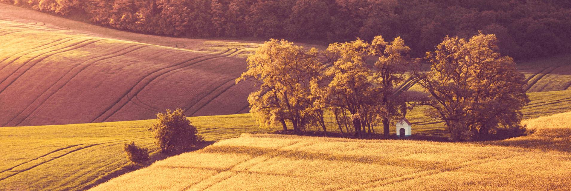 Kirche-unter-Baeumen-in-einem-Feld-Wer-und-warum